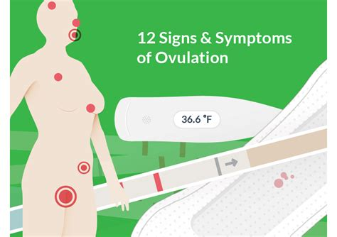 Luxury Ovulation Symptoms And Signs Top 12 Fertile Signs. Take Ap Courses Online Austin Moving Services. After Gastric Bypass Surgery. Best Bond Funds To Buy Now Pest Control News. Free Voip Phone Calls Account Now Add Money. How To Remote Desktop Windows 8. Volkswagen Dealership Pittsburgh. Crowd Control Stanchion Saks 10 Off Email Code. Roofing Companies Richmond Va