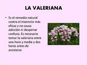 tipos de plantas curativas With como usar la raiz de valeriana como remedio contra el insomnio