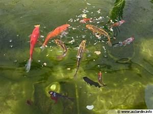 Nourriture Poisson Bassin : nourrir ses poissons de bassin ~ Melissatoandfro.com Idées de Décoration