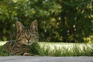 Katze Im Garten Begraben : katze im garten bild foto von bigfotofly aus 15 ~ Lizthompson.info Haus und Dekorationen