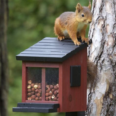 squirrel feeder  blue door