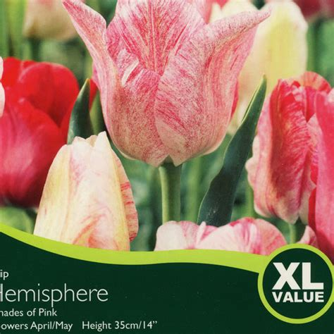 bulbs tulip hemisphere bulbs for sale mail order