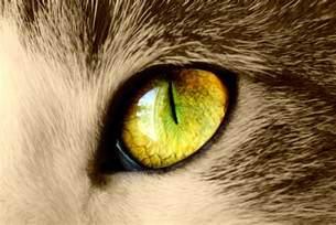 cat s eye the amazing world of cat s eye macro photography