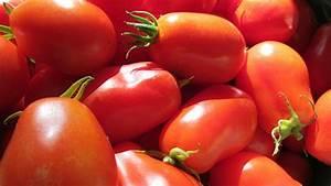 Tomaten Krankheiten Bilder : roma tomaten beliebte tomatensorte in k che und garten ~ Frokenaadalensverden.com Haus und Dekorationen