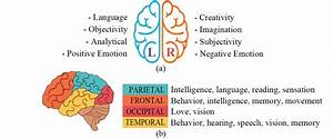 Brain Structure   A  The Cerebral Cortex Includes The