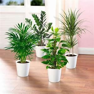 Pflegeleichte Pflanzen Für Die Wohnung : zimmerpflanzen ~ Michelbontemps.com Haus und Dekorationen