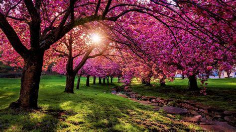 Pinky Spring Scenery Wallpaper  Wallpaper Studio 10
