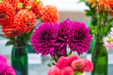 Dāliju ziedu izstāde | biedribasnams.lv