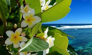 Beautiful Tropical Flower Backgrounds Pictures to Pin on ...