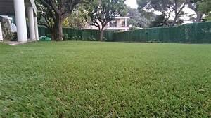 Acheter Gazon Artificiel : acheter rouleau de gazon rouleaux de pelouse trouvez le ~ Edinachiropracticcenter.com Idées de Décoration