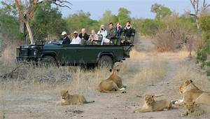Safety with lions on safari - Africa Geographic