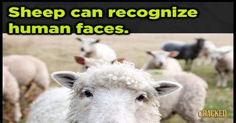Animals That Eerily Demonstrate Human Like Behavior