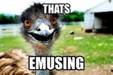 Meme Puns - 20 animal memes that show how we feel on mondays