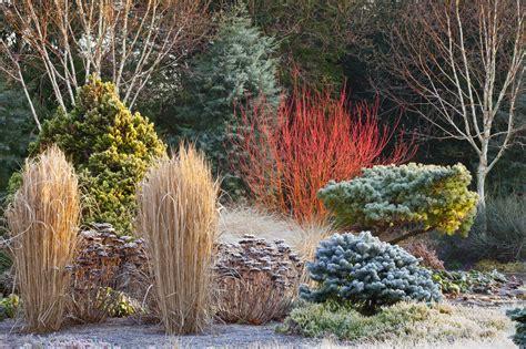 tlc  tree  landscape company  colorful winter