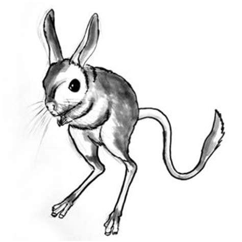 draw  jerboa