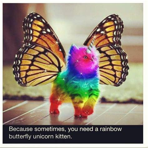 Unicorn Rainbow Meme - rainbow unicorn kitten meme google search the owl and the pussycat pinterest rainbow