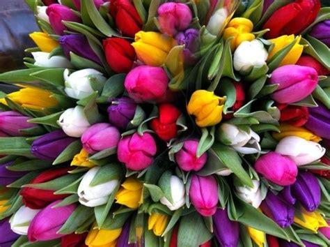 amsterdamse bloemen tulpen 500 000 tulpen sieren hoofdstad residence