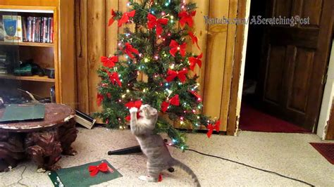 xmas tree made out of cats cats help set up and tear tree caturday