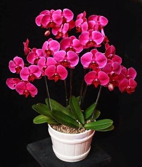 merawat bunga anggrek cepat berbunga tanaman