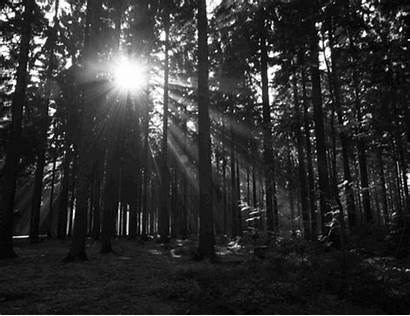 Forest Gifs Dark Giphy Into Trees Sun