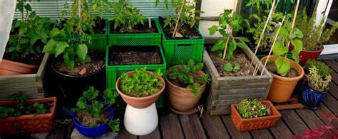 Balkon Gemüse Pflanzen by Meine Ernte Balkongarten