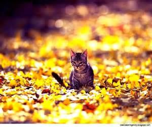 Cat in Fall Autumn Wallpaper