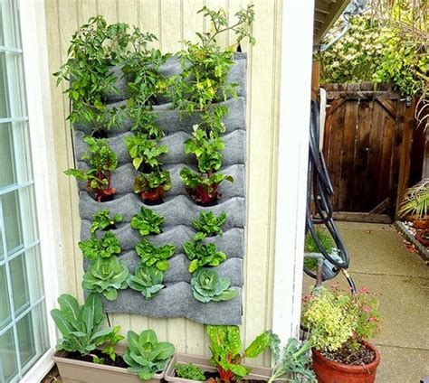 hanging vegetable garden decorate with hanging trees in the garden feng shui