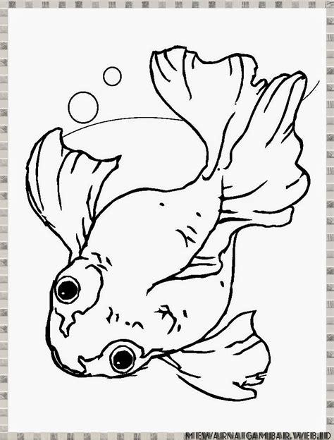 mewarnai gambar ikan koki