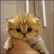 Funny Crying Cat Meme