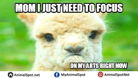 Shaved Llama Meme - shaved llama meme 28 images 21 funny llama memes if you don t need no drama llama taboot