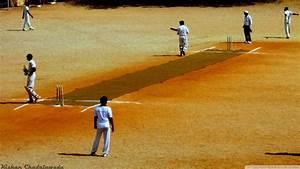 Cricket Wallpaper - HD