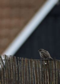 bird gifs    gif  gifer