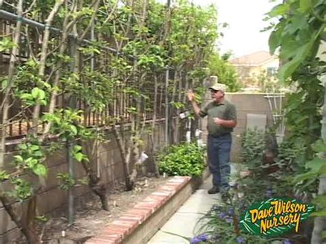 best backyard fruit trees high density landscape