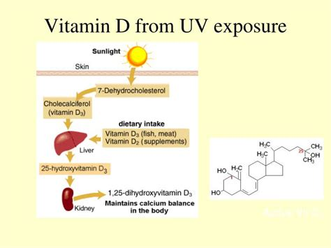 uv l vitamin d ppt vitamins in ruminants powerpoint presentation id
