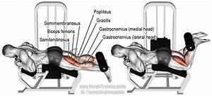 Lying leg curl exercise instructions and video   Weight ...