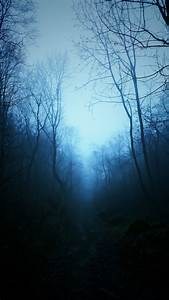 Mist, Nature, Dark, Blue, Trees, Tropical, Forest, Forest
