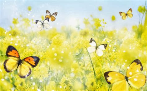 Free Animated Butterfly Wallpaper - animated butterfly wallpaper wallpaper animated
