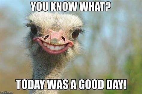 Today Was A Good Day Meme - 27 today was a good day meme pictures that only try to put a smile on your face