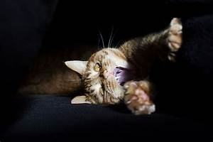 Meet Luccie: My Yawning And Stalking Cat | Bored Panda