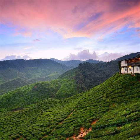 unique travel  cameron highlands malaysia blank canvas blank canvas