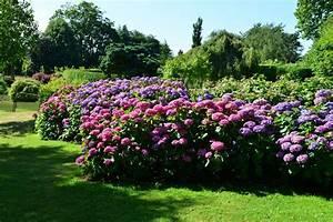 35 Hydrangea Garden Ideas PICTURES Home Stratosphere