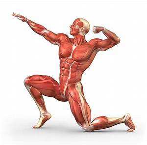 The Muscular System  How We Move Around