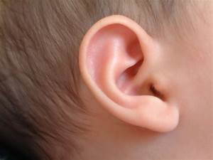 The Inner Ear May Hold A Clue In Quest To Find Cause Of Sids