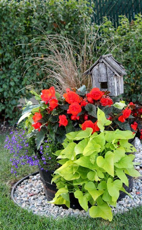 shade flowers for pots shade pot gardening pinterest