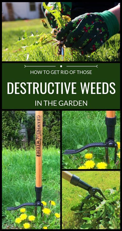 rid   destructive weeds   garden