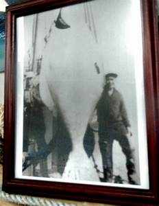 holy double barn doors batman a 900 pound halibut With barn door halibut