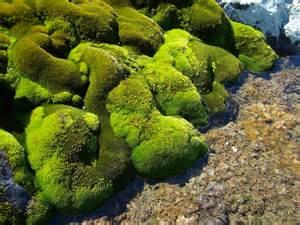 Antarctica Plant Life