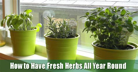 Window Ledge Garden by Starting An Indoor Herb Garden On Your Bay Window Ledge Is