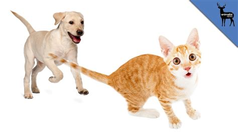 dogs chase cats youtube