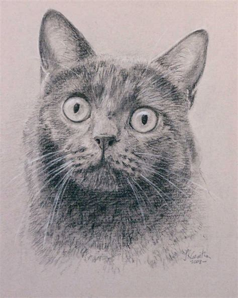 52 Best Cat Portraits  My Paintings And Drawings Images